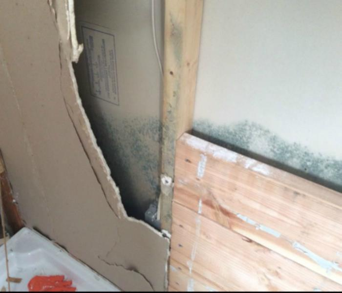 Peek-A-Boo Mold in Chico Home