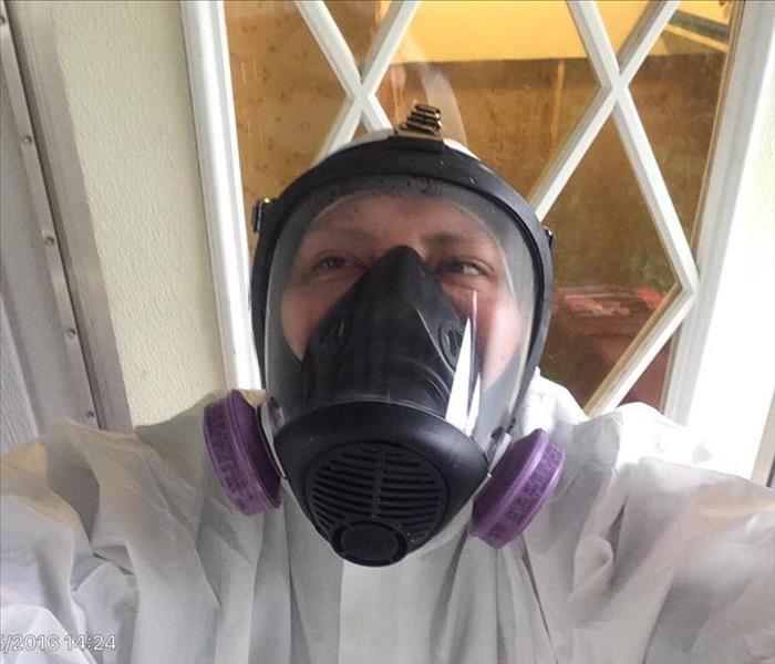 Mold Remediation Who to Call When You Find Mold in Your Business