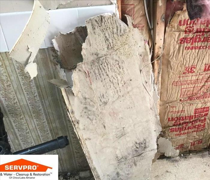 Mold Remediation Finding Mold in Your Home or Business?