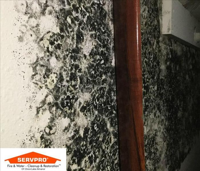 Mold Remediation SERVPRO Continuing Education: Mold (4 hr)